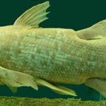 Giant coelacanths have been lurking in the ocean for hundreds of millions of years!