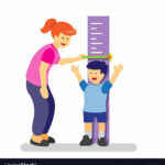 How is human height affected by genetics?