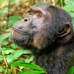 Here's how Primate's ancestors might have survived extinction!